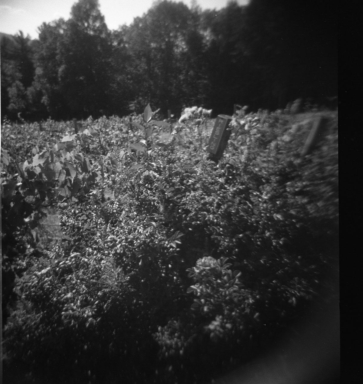 Ithaca(4)DeenaDanielle©